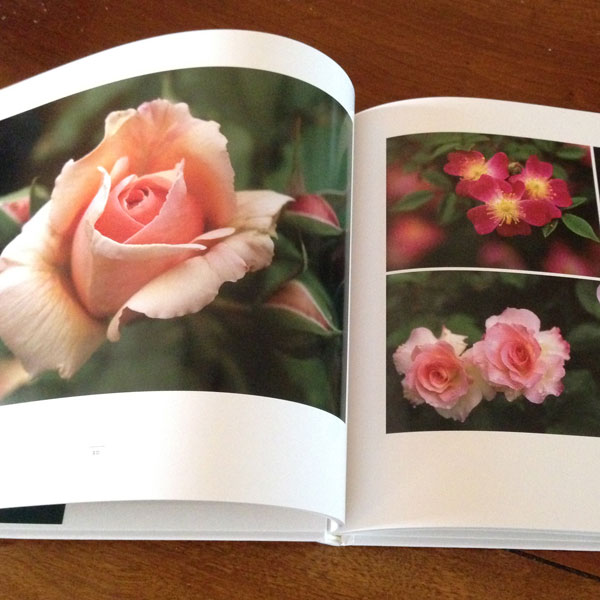 The Rose Garden of Fukushima by Maya Moore