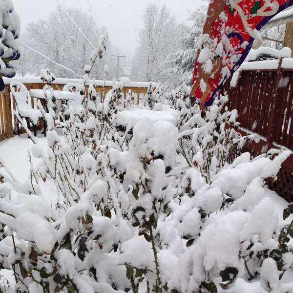 Snow Forming the Perfect Insulation for The Elevated Garden Last Year