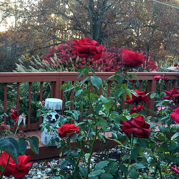 Veterans' Honor at Sunrise in the Rose Garden