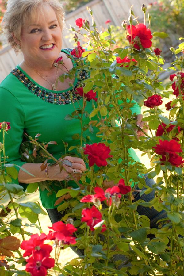 Jackson & Perkins Floribunda. New Generation Roses ® Collection. Bred by Dr. Keith W. Zary, U.S.