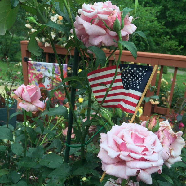 'Memorial Day' blooming on Memorial Day Week End