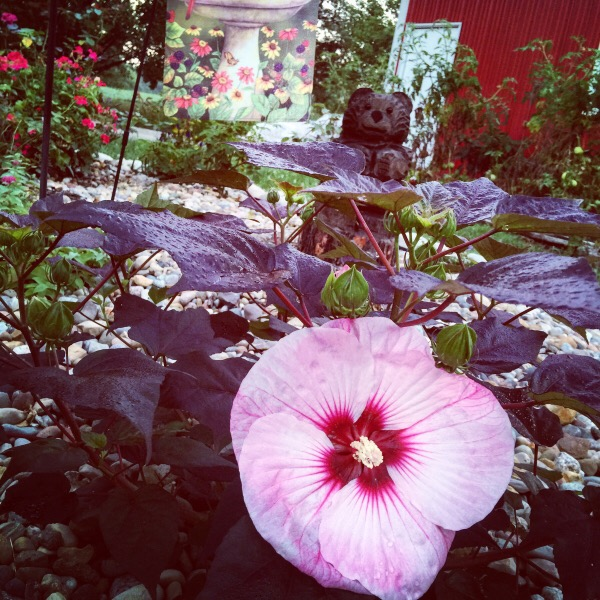 Hibiscus Summerific® 'Berrylicious'