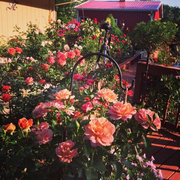 Gaga's Garden In Bloom