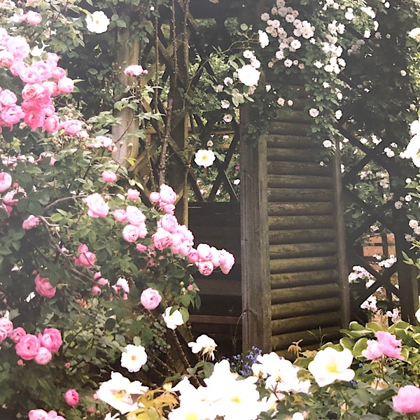 White & Pink Rose SectionWhite & Pink Rose Section; Serentity garden of old garden roses Right trained round a pole: 'Cl Summer Snow', center, covering the pergola 'White Mrs. Flight', left 'Raubritter'