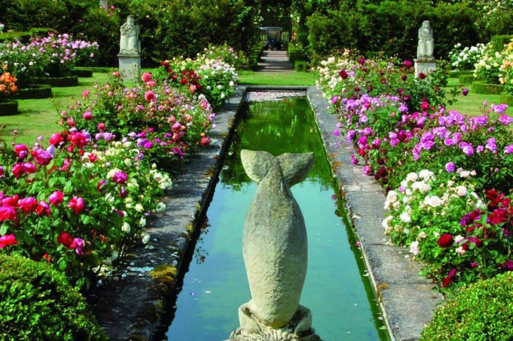 The David Austin Rose Garden at Albrighton, England