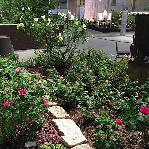 Chicago Flower & Garden Rose Garden in Bloom