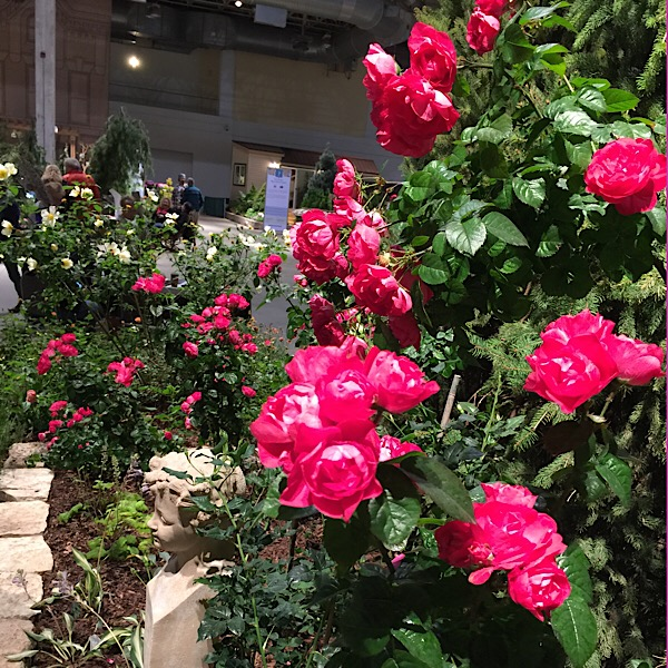 'Party Hardy' bred by Christian Bedard in Bloom at the Chicago Flower & Garden Show