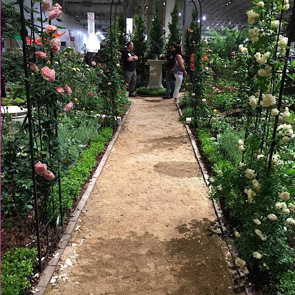 Chicago Flower & Garden Rose In Bloom Walkway