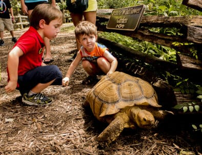 The Land Between The Lakes Woodlands Nature Station Turtle