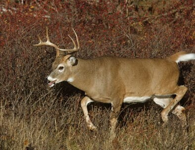 The Land Between The Lakes Hunting Quota Hunt Deer