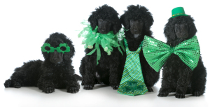 St Patricks Day dogs