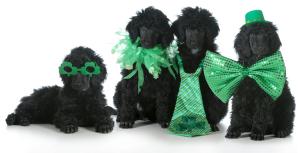 St Patricks Day dogs