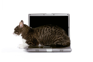 sideways cat on laptop
