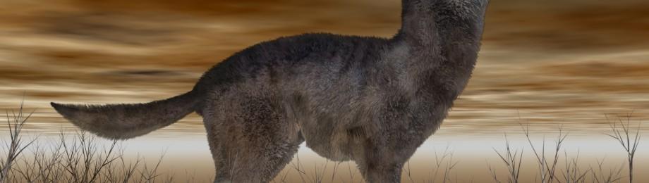 wolf habitat