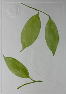A Leaf in the Wind #2, Indian Medlar & Cestrum Nocturnum