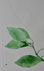 A Leaf in the Wind #6, Beleric Myrobalan, Sapodilla Plum & Cinnamon (detail)