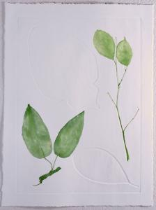 A Leaf in the Wind #7, Krishna's Buttercup, Queen's Flower, Cestrum Nocturnum & White Fig
