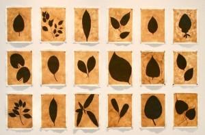 Installation view of Sanskriti Leaves