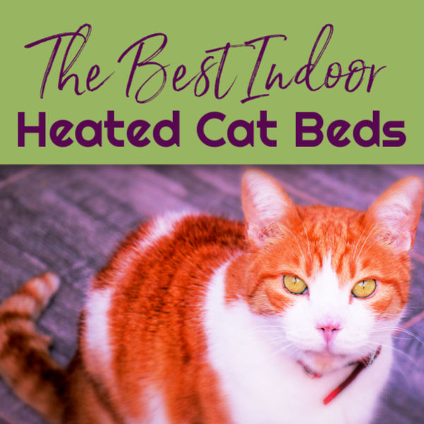 Best Heated Cat Beds Indoors by BestHeatedCatBed.com