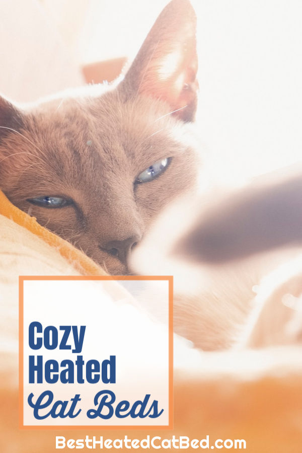 Perfect Heated Cat Beds by BestHeatedCatBed.com