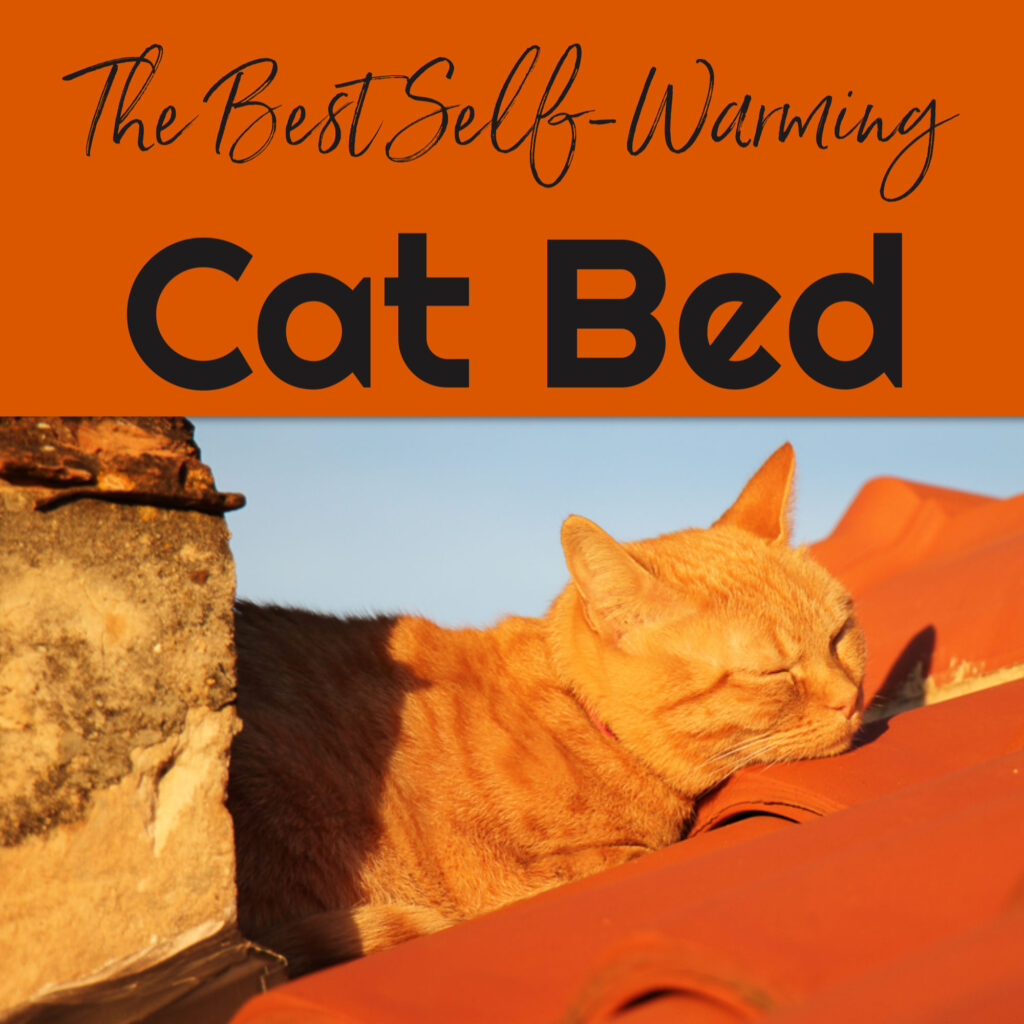 Picture of: Self Warming Cat Beds Best Heated Cat Bed