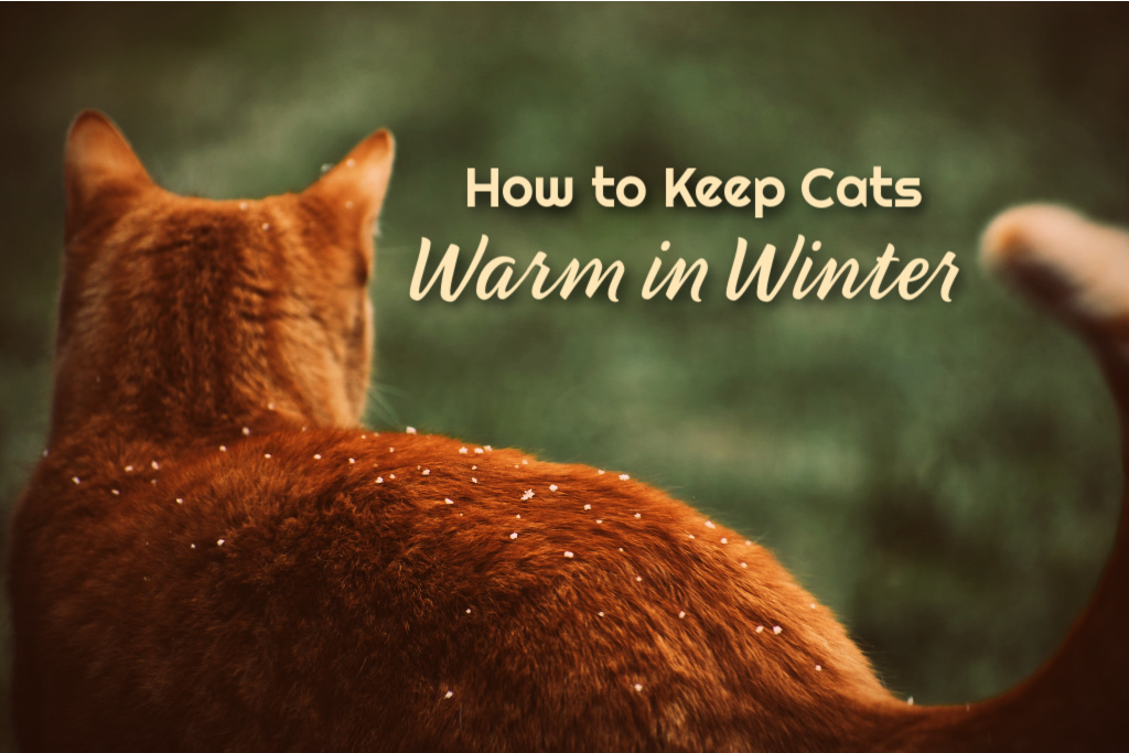 How To Keep Cats Warm in Winter by BestHeatedCatBed.com