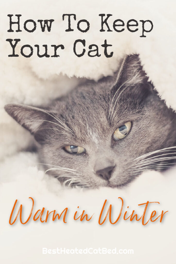 How To Keep Your Cat Warm in Winter by BestHeatedCatBed.com