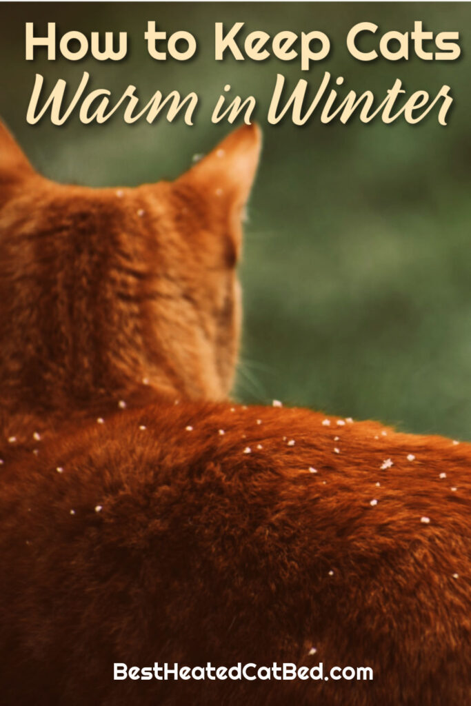Keep Cats Warm in Winter by BestHeatedCatBed.com