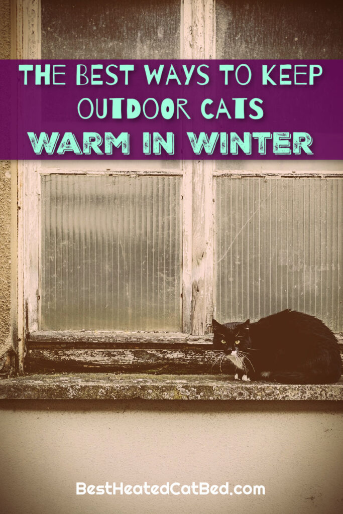 Keep Outdoor Cats Warm in Winter by BestHeatedCatBed.com