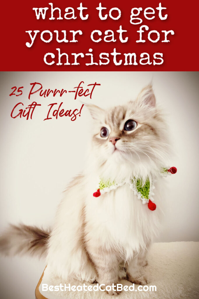 What To Get Your Cat For Christmas by BestHeatedCatBed.com