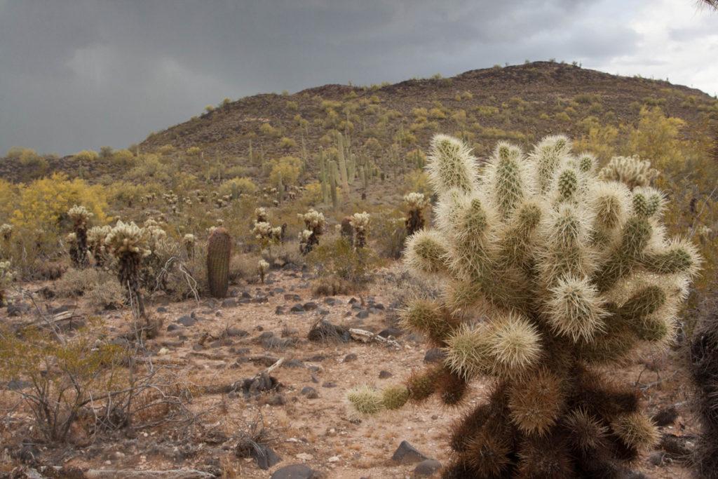 ArizonaCup2016_DesertSurrounding1