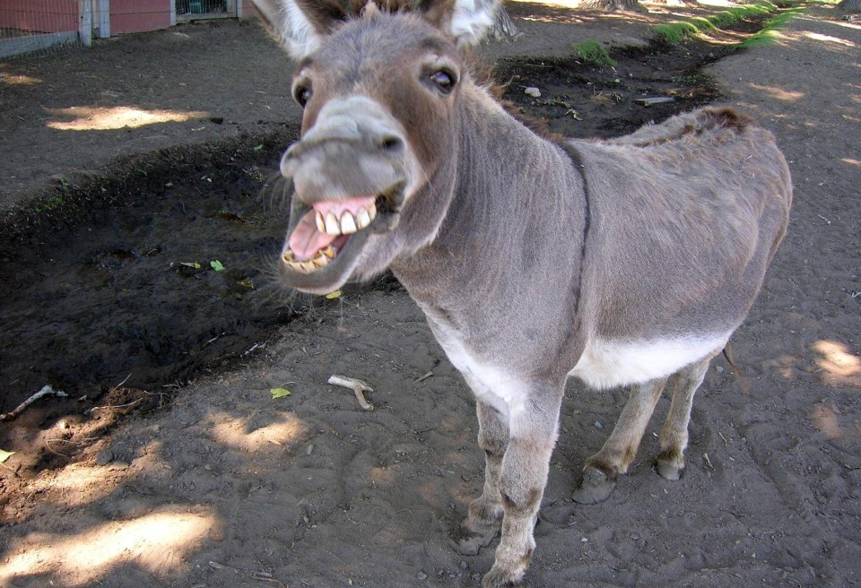 ssn lookup results donkey