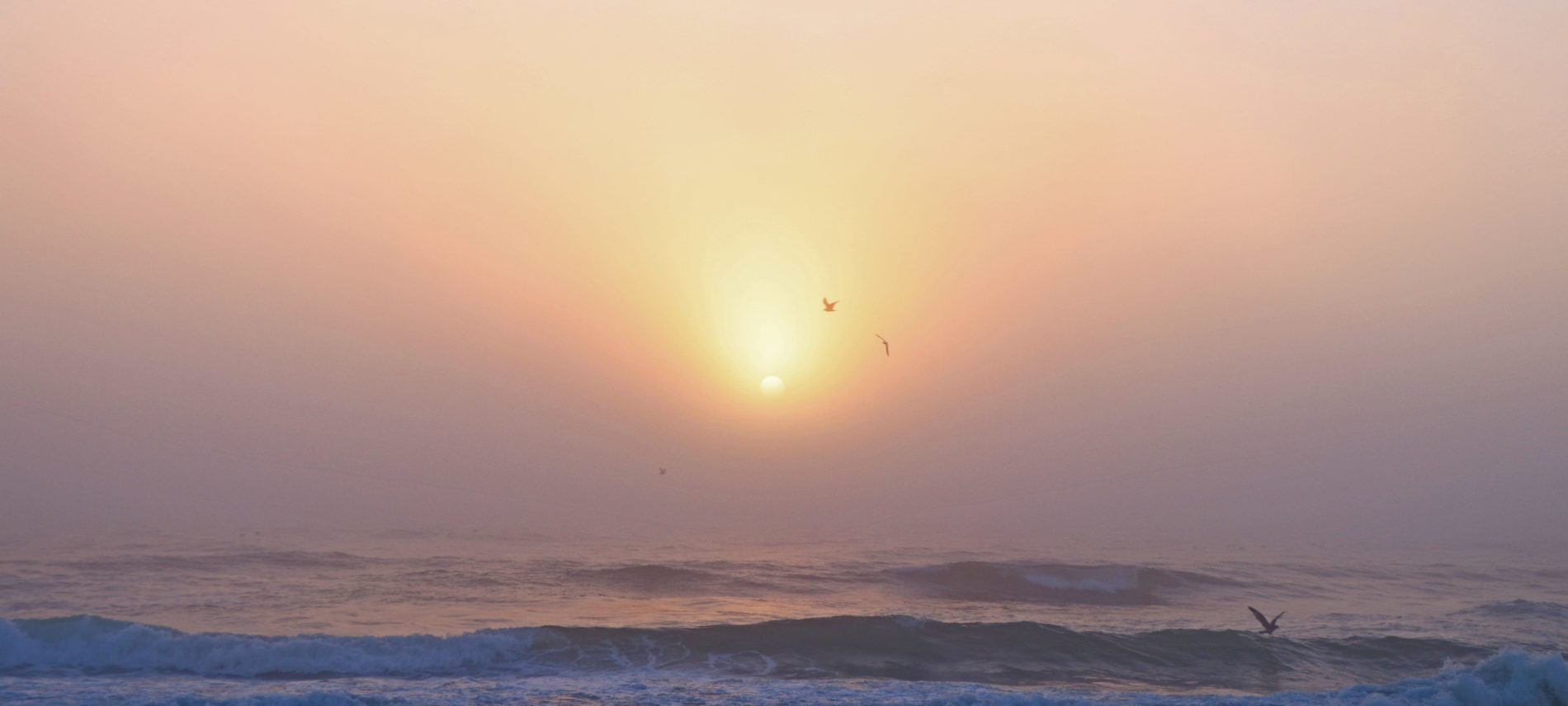Sun rising above the ocean with a pale pink sky and seagulls flying above the waves and in front of the clouds