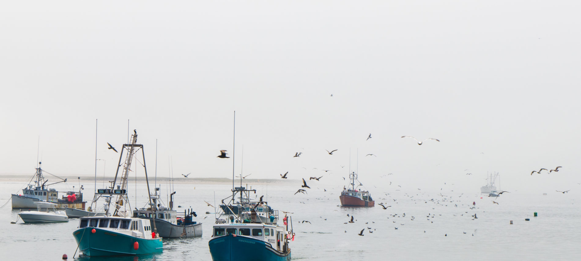 Fishing boats coming into the harbor in the fog with seagulls flying around