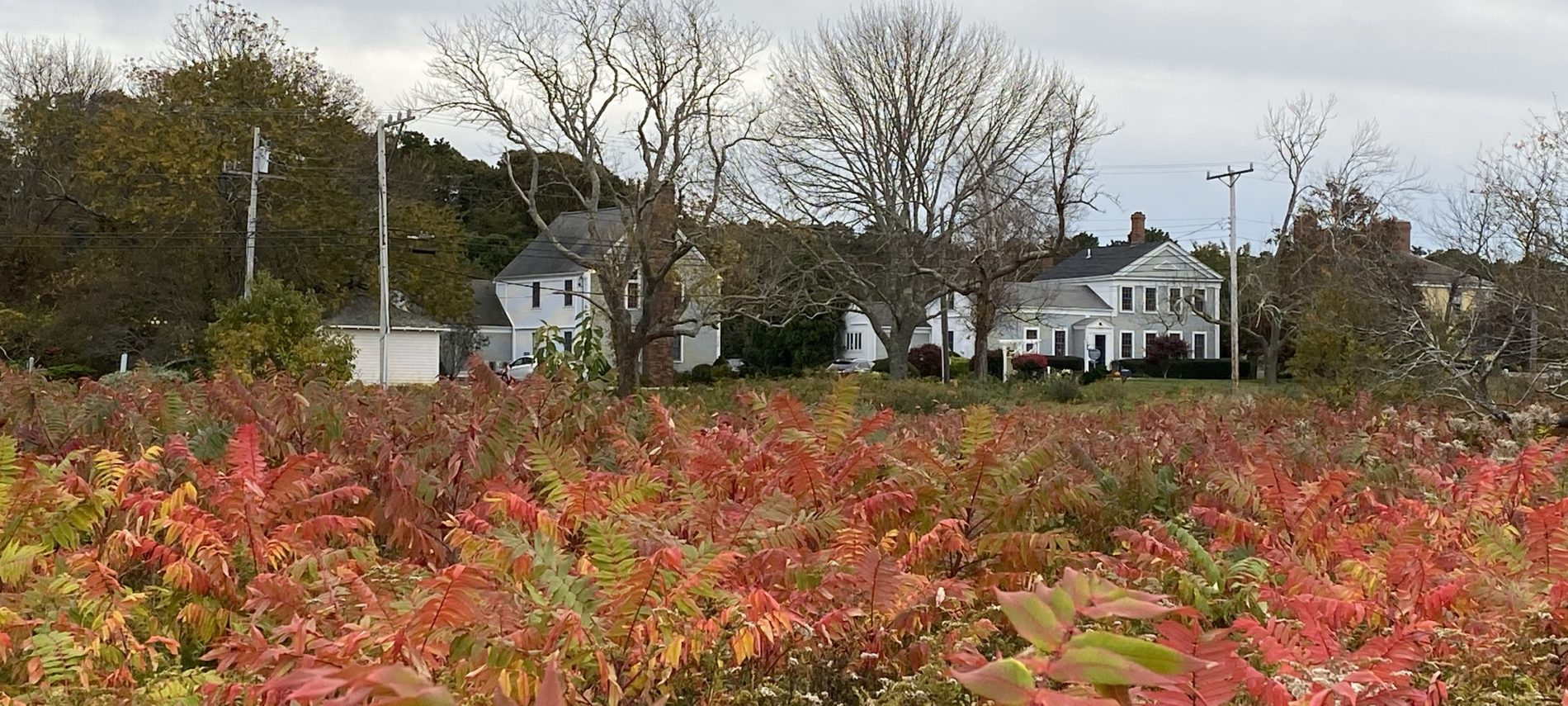Looking through a field during the fall at Brewster By The Sea Inn