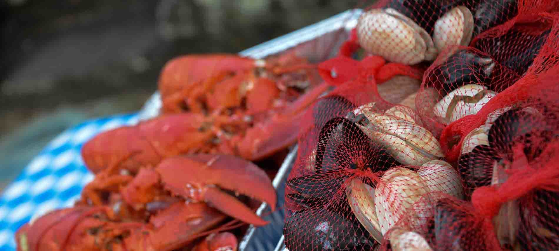 Lobster in a pan and shellfish in red mesh bags on a table