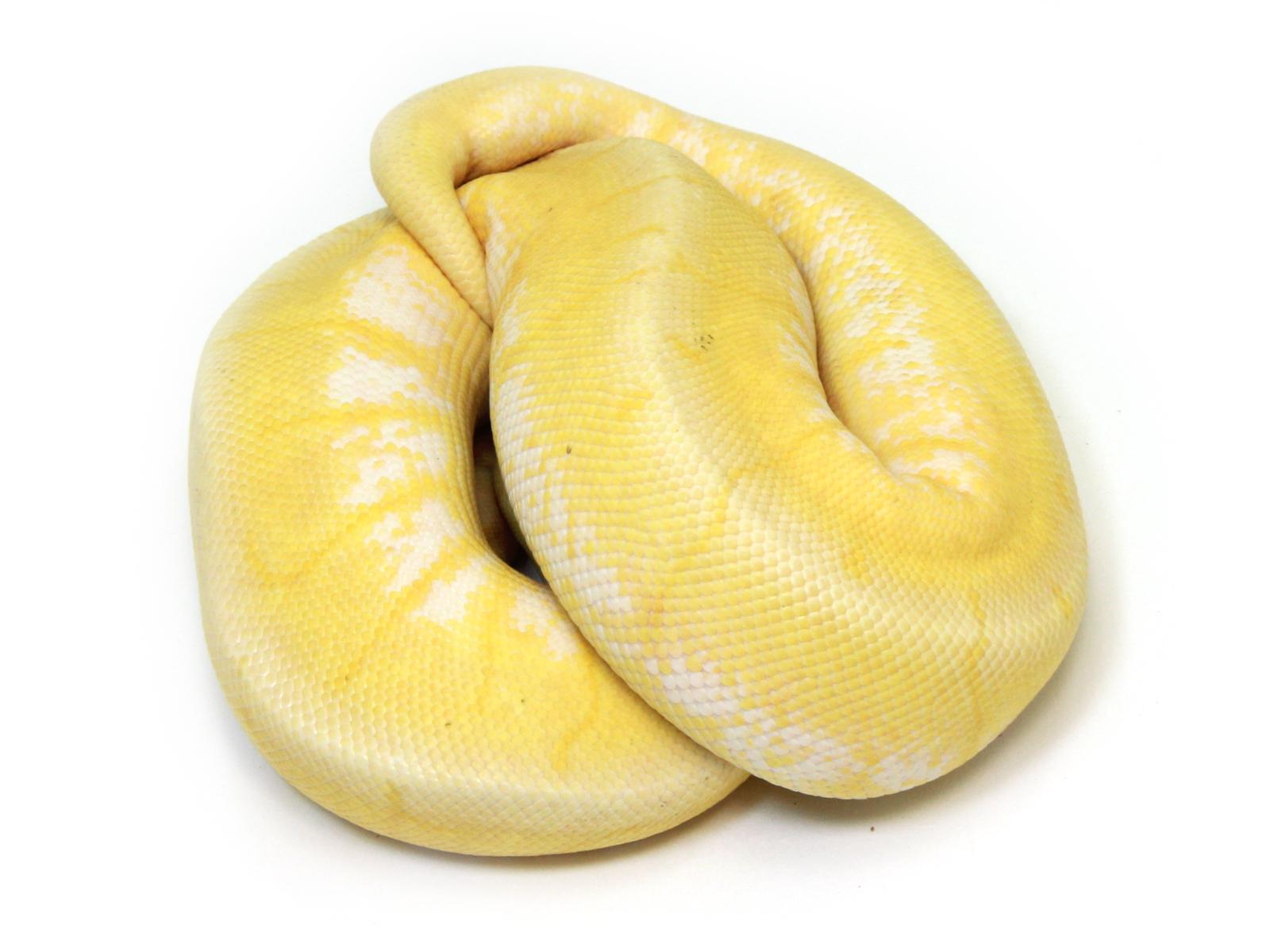 Banana Pastel Spinner