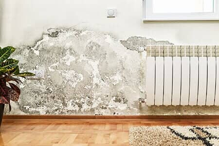 Mold Removal in Kenneth City