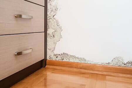 Mold Remediation Company Kenneth City