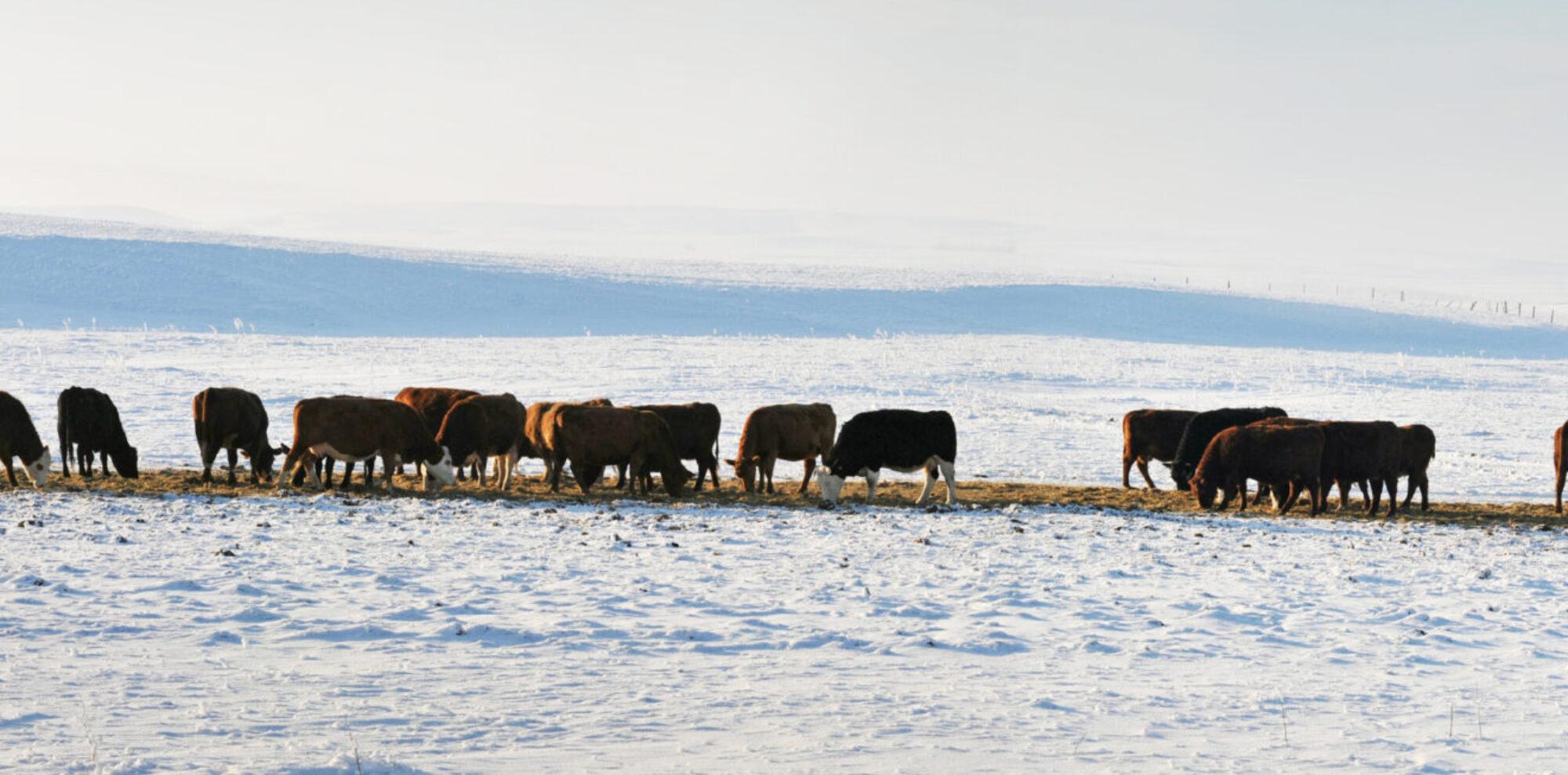 Livestock Wx