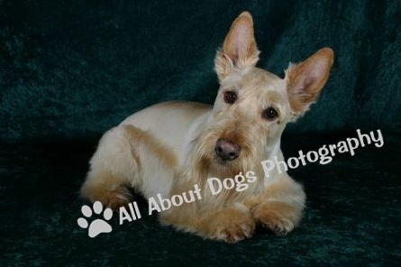 All About Dogs Photography