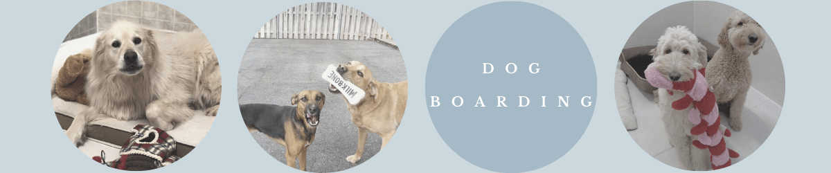 All About Dogs Boarding