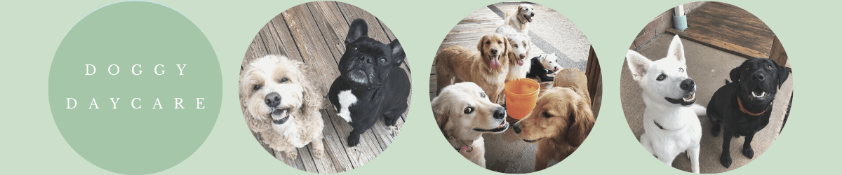 All About Dogs Daycare