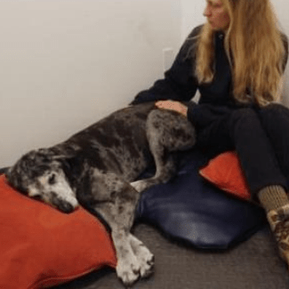All About Dogs Massage