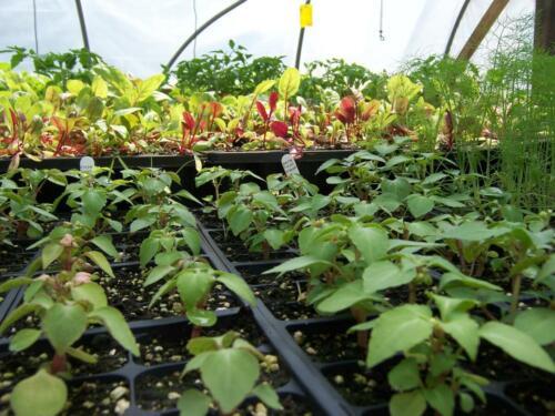 greenhouses6