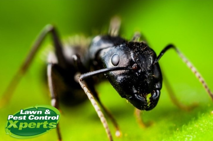 5 Reasons For Pest Control   Blog   Lawn & Pest Control Xperts