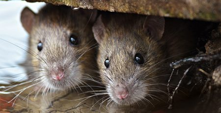 Mouse Control | Blog | Lawn & Pest Control Xperts