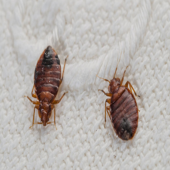 Bed Bug Control | Lawn & Pest Control Xperts