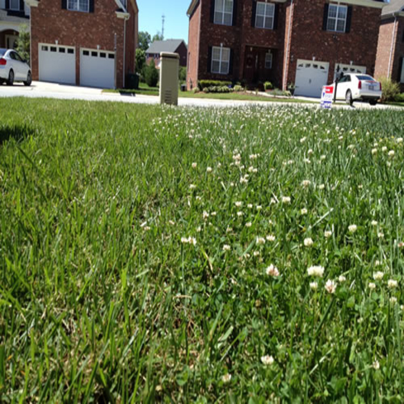 Fertilizer and Weed Control | Lawn & Pest Control Xperts