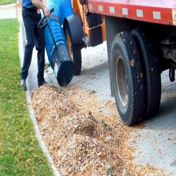 Leaf Removal | Lawn & Pest Control Xperts